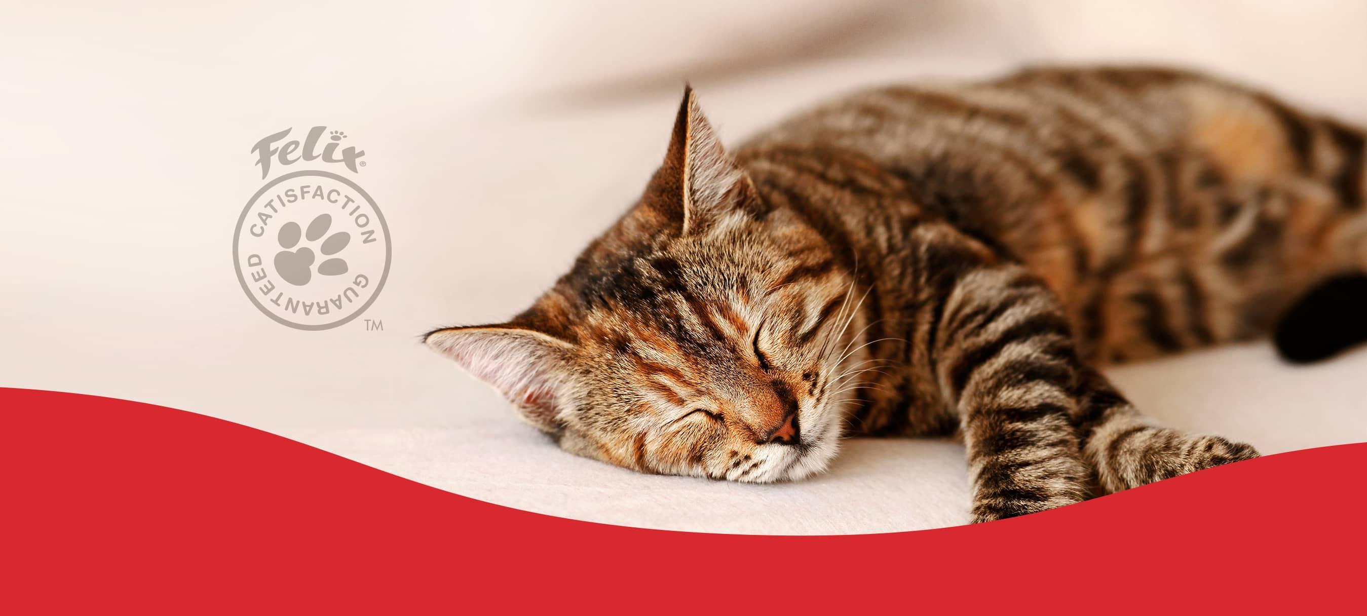 CatsPreferChef Banner